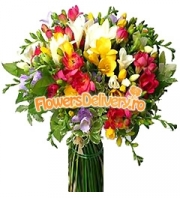 Bouquet of freesias