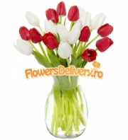 Tulips in white and red